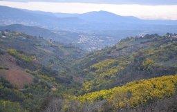 Mimosa Photo Gallery - Tanneron hilltop views