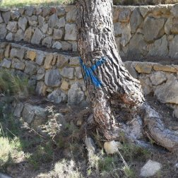 Provence's Blue Coast - tree marked with X