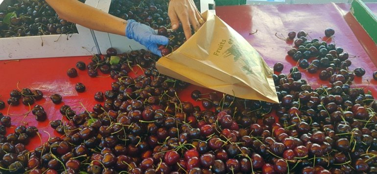 Addicted to Cherries - Marché de la Cerise