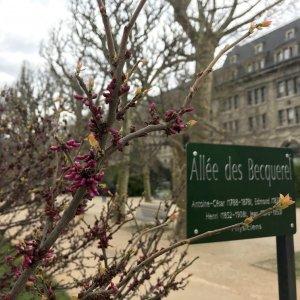 Silent Sunday - Jardin des Plantes - Paris