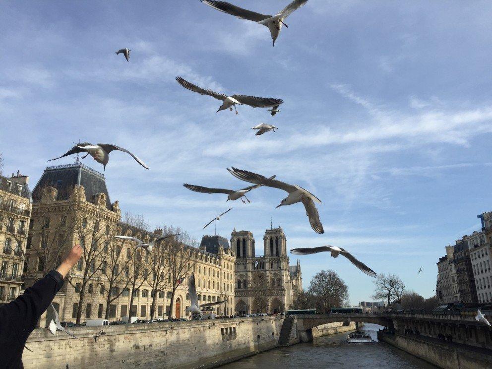 Honoring Notre-Dame-de-Paris - Seagulls