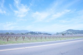 Napa_Vineyard6