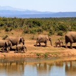 Avoiding The Allure Of Charity or Volunteer Travel