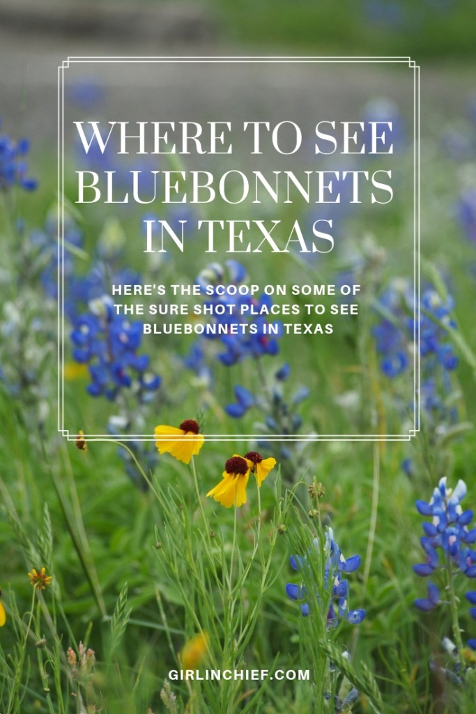 Where To See Bluebonnets In Texas  #texas #bluebonnets #spring #wildflowers #texaswildflowers #springroadtrip #texashillcountry