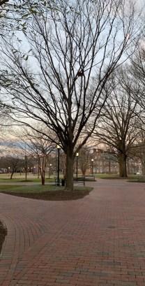 Campus of Johns Hopkins University JHU