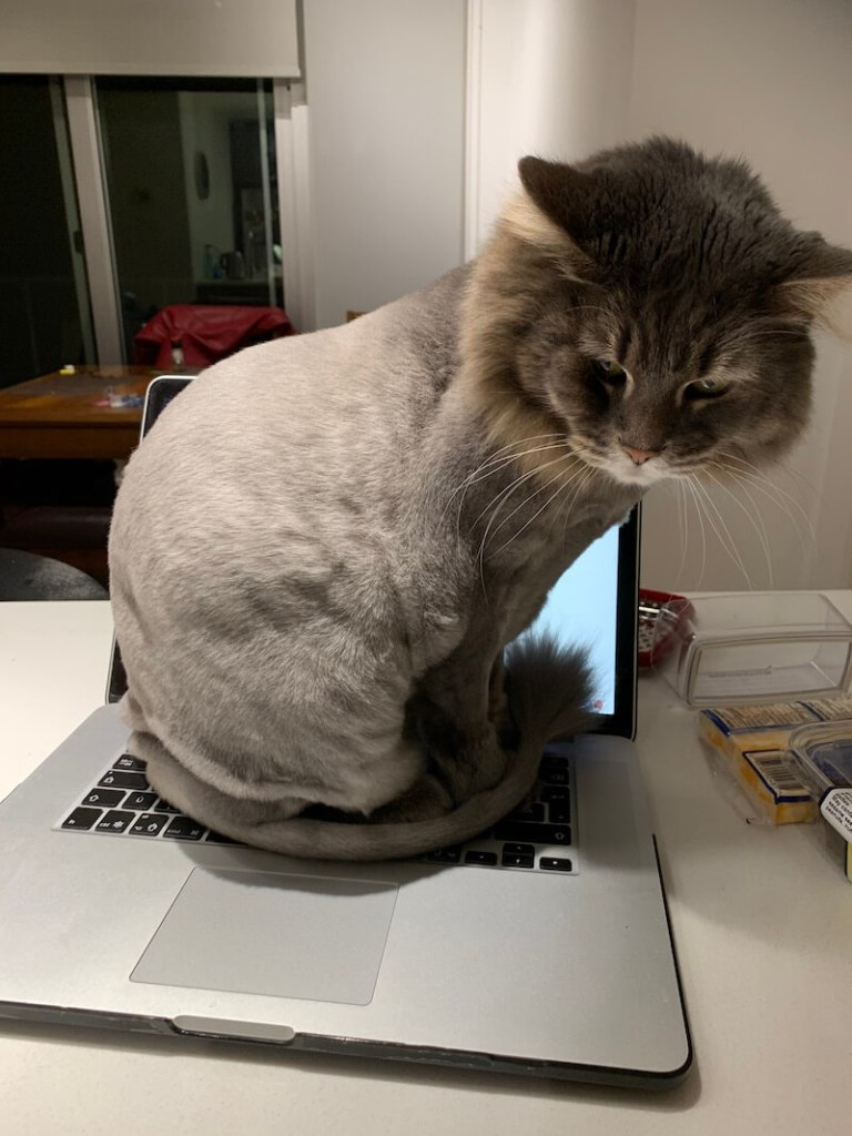Minou, Marie's cat, sitting on the keyboard of her Macbook pro in the kitchen