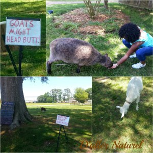 animal feeding collage