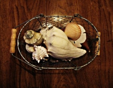 shell treasures