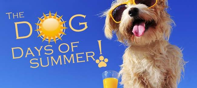 Dog Days of Summer and Your Fitness Routine
