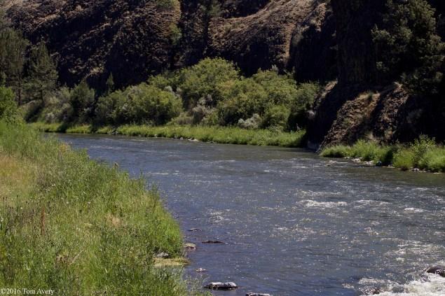 Lexus river 72dpi