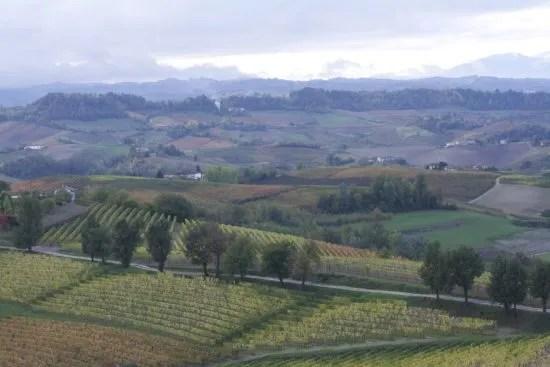 Novello in Barolo