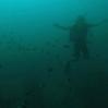 Diving in Ko Tao