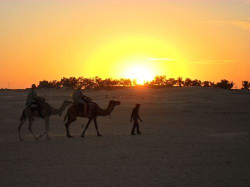 Dromedaris rit in Sahara