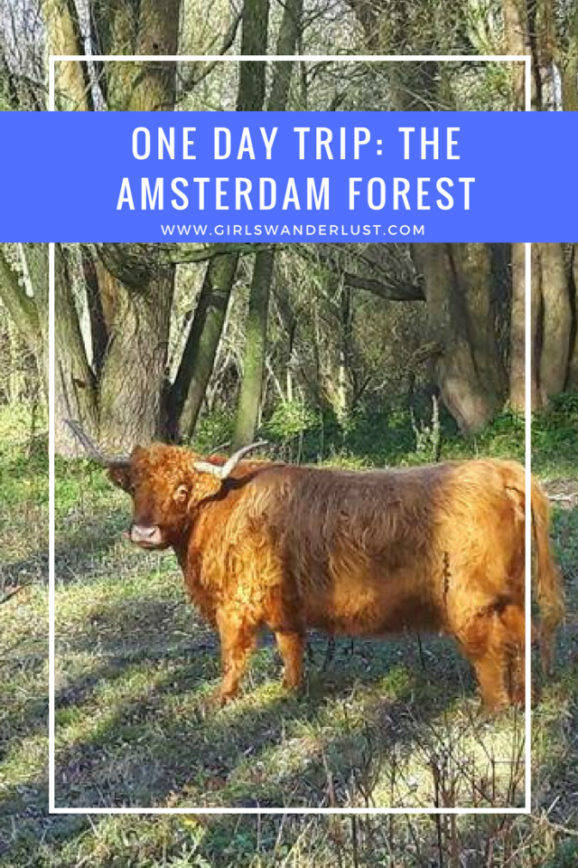One day trip- The Amsterdam Forest. #girlswanderlust #wanderlust #travel #traveling #travelling #travel #travelblog #travelinspiration #Amsterdam #Netherlands.png