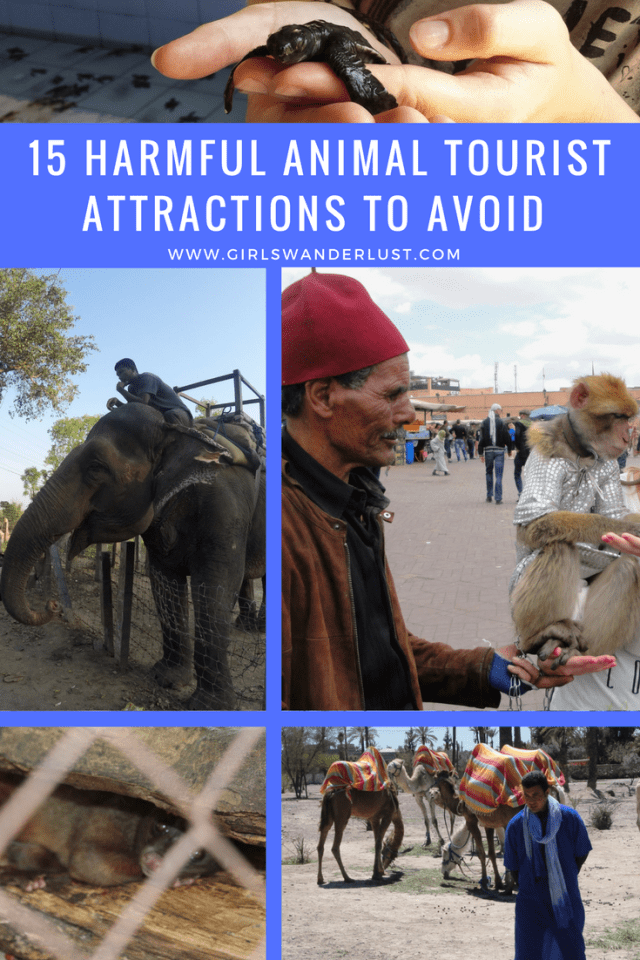 15 Harmful animal tourist attractions to avoid by @girlswanderlust. #harmful #animal #tourist #attractions #travel #girlswanderlust #wanderlust #nature