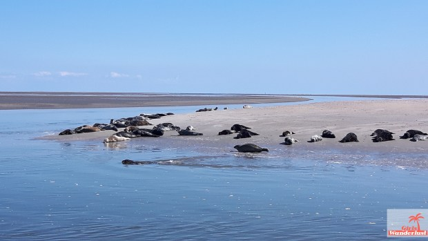 Top 10 things to do in Texel – The Netherlands (including map).seals.jpg