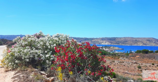 The Blue Lagoon, Comino Island – A piece of paradise in Malta - Comino island