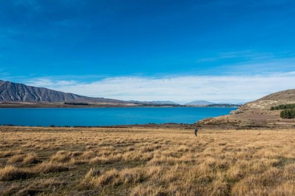 Lake Tekapo Peninsula Walkway