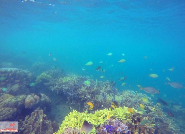 Gili Nanggu, Gili Tangkong, Gili Kedis and Gili Sudak – The paradise islands of Lombok via @Girlswanderlust. Snorkel 7. #girlswanderlust #gili #lombok #indonesia #gilinanggu #nanggu #k