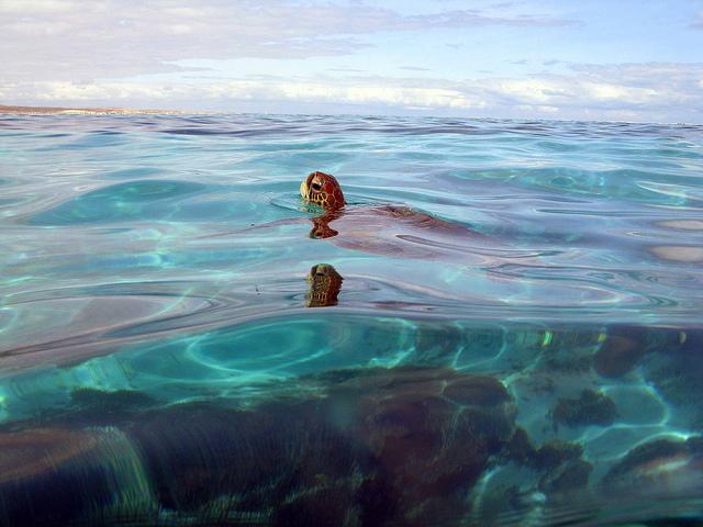 5 Unmissable places in Australia via @girlswanderlust #australia #aussie #travel #wanderlust #girlswanderlust #ningaluu #reef #ulutu #