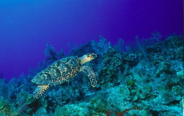 discovering-the-wonderful-wildlife-in-the-cayman-islands-by-girlswanderlust-cayman-islands-caymanislands-uk-united-kingdom-girlswanderlust-wanderlust-britsh-carribean-travel1.jpg