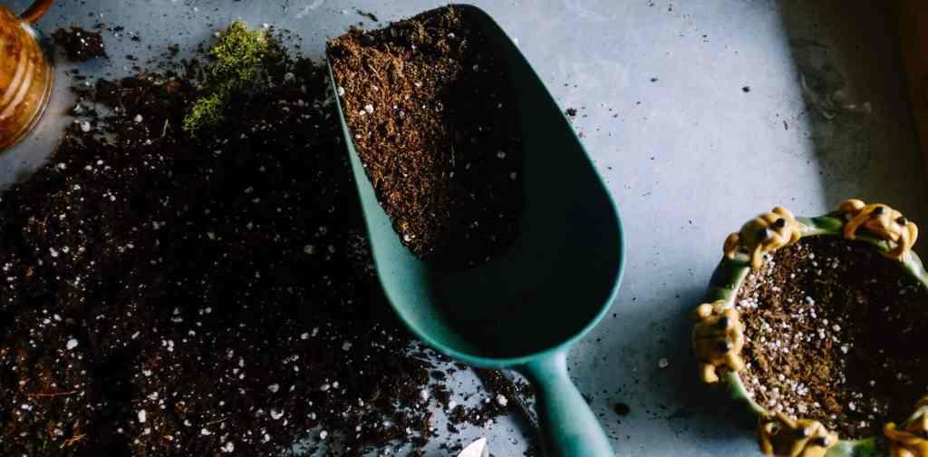 Girls Who Travel | Indoor Gardening