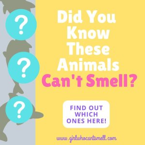 animals cant smell