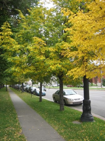 medium_fall_trees.jpg