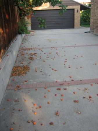 medium_fruity_driveway.jpg