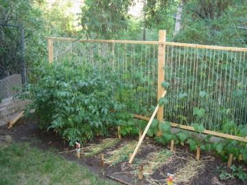medium_garden.jpg