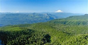 Great Hikes in the Columbia Gorge, Sherrard Point, Larch Mountain, Girl Who Travels the World