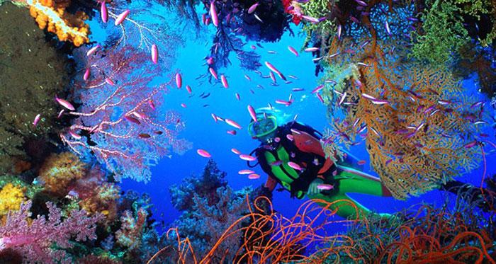 Best Snorkel Spots in Cozumel, Palancar Reef