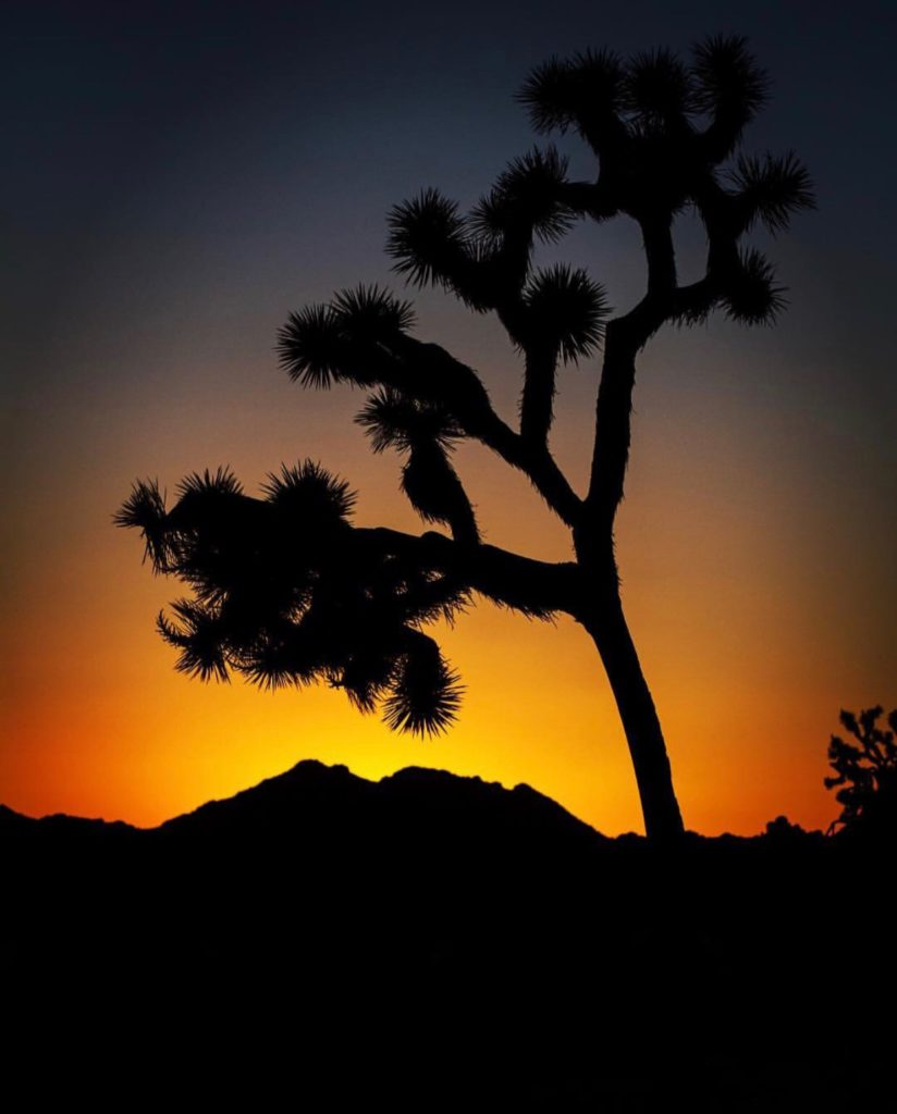 20 Photos to Inspire Your Joshua Tree Trip, Girl Who Travels the World, What Cameras Do Your Fave Instagram Stars Use?