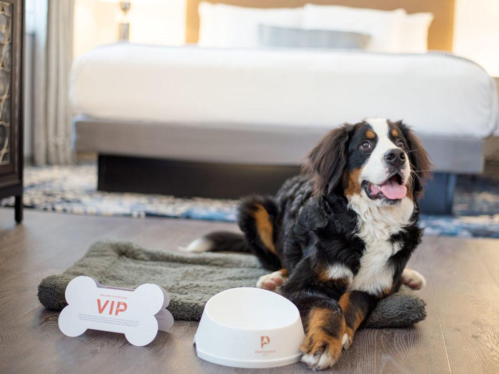 Best Pet-Friendly Hotels in Portland, Oregon, Girl Who Travels the World, The Heathman VIP Pup
