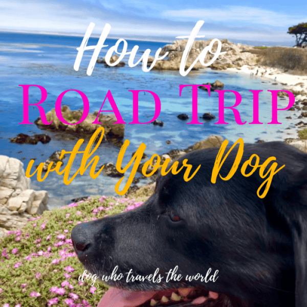 How to Road Trip with Your Dog in Style