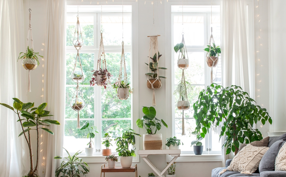 Best Plants to Help Purify Indoor Air, Girl Who Travels the World