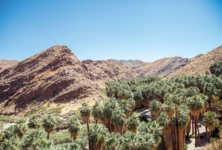 Top Five Day Hikes by Palm Springs, Girl Who Travels the World, Palm Canyon Trail