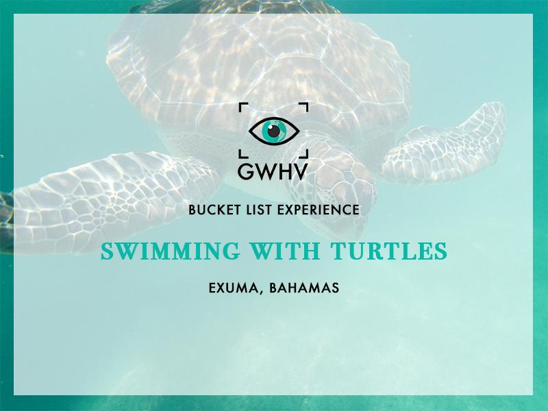 Turtles-FeatureImage