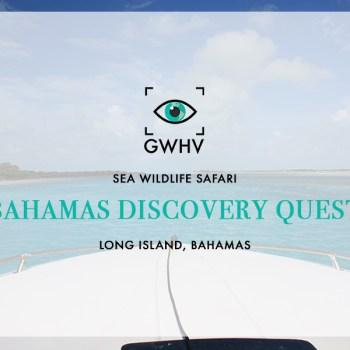 Bahamas Discovery Quest: Sea Wildlife Safari