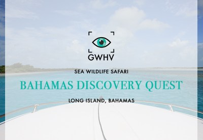 Bahamas Discovery Quest: Sea Wildlife Safari