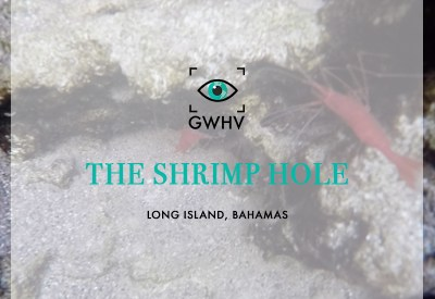 The Shrimp Hole, Long Island, Bahamas