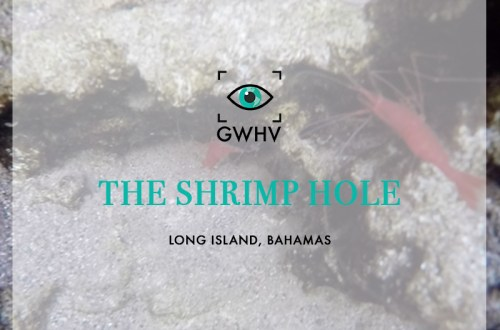 The Shrimp Hole