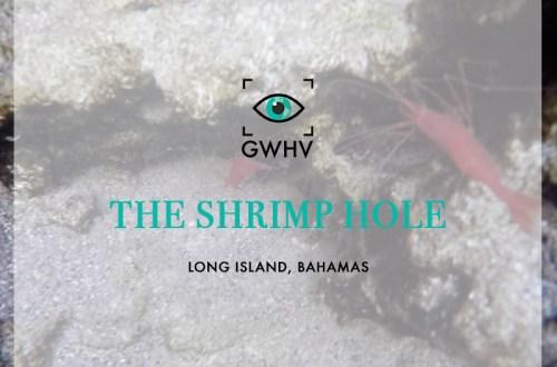 The Shrimp Hole