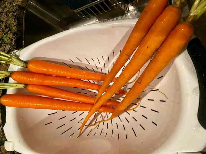 carrots in a collander over the sink
