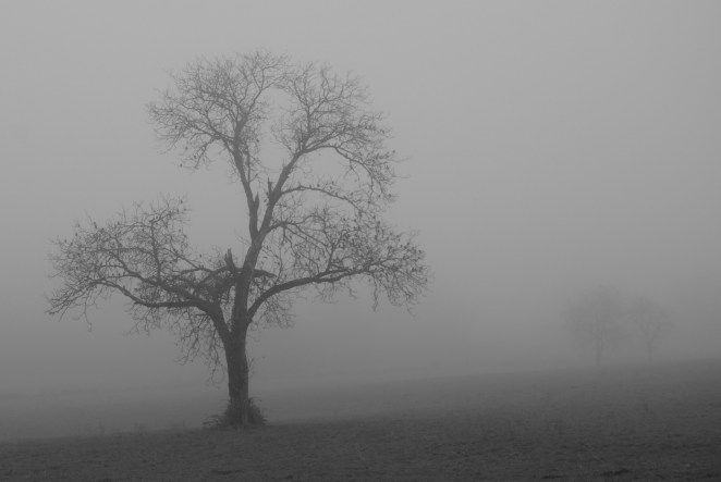 Eerie Mist Photography - Design Mash