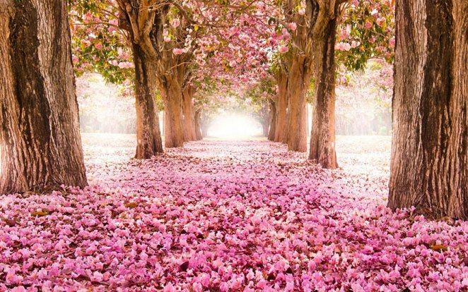 Be Enchanted By These Beautiful Tree Tunnels - Girly Design Blog