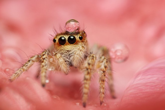 Welcome to the Tiny World of Macro Photography - Girly Design Blog