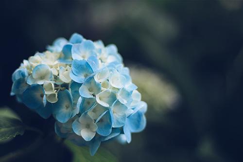 「女性・女の子」「巻き髪」「春」「花かんむり」「草原」などがテーマのフリー写真画像