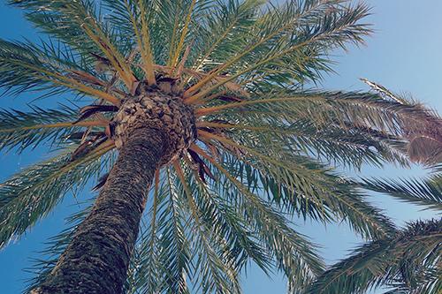 「南国」「夏」「植物」などがテーマのフリー写真画像
