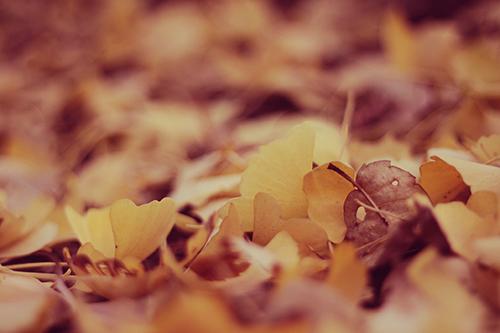 「カボチャ」「秋」などがテーマのフリー写真画像